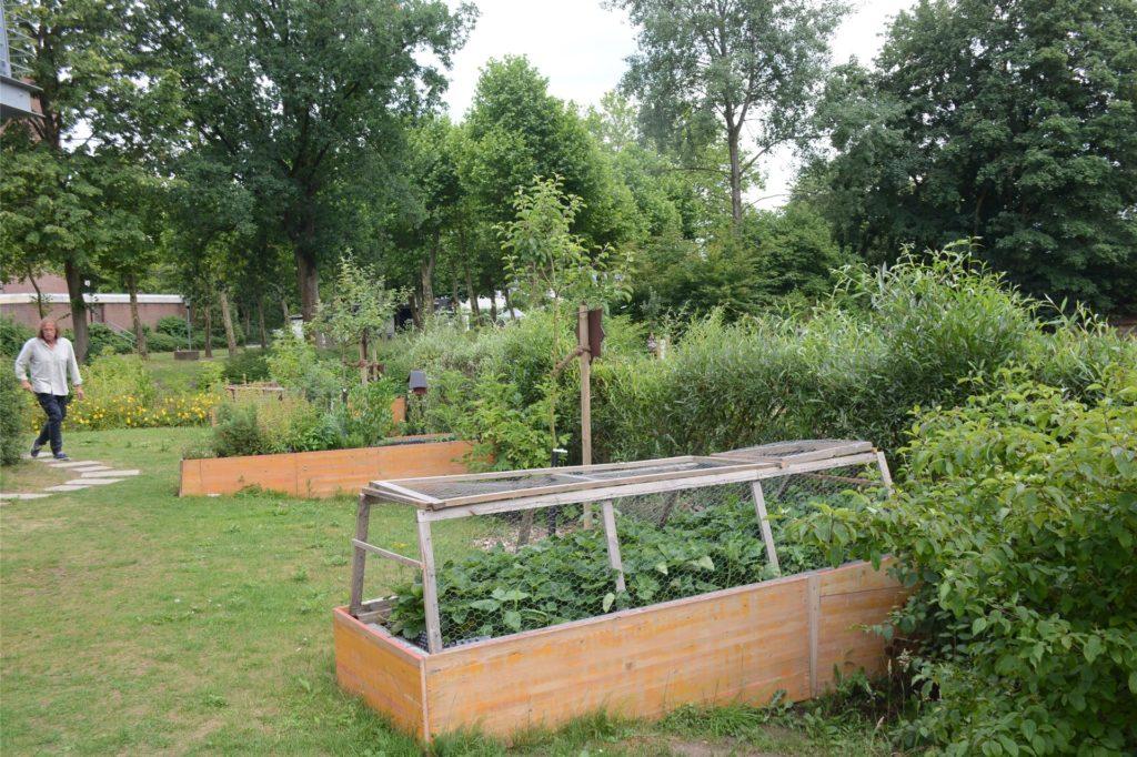 Bernd Pape wird mit den Bewohnern des LWL-Wohnhauses den Essbaren Garten noch mehr zum Schmuckstück machen.