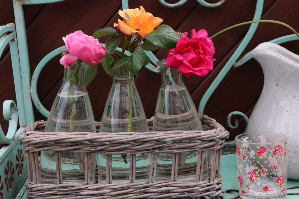 Sieht nicht nur gut aus, sondern hat auch einen weiteren Zweck: Die drei Rosenzweige bilden Triebe aus, die Rita Liesner einpflanzt und so neue Rosenstöcke züchtet.