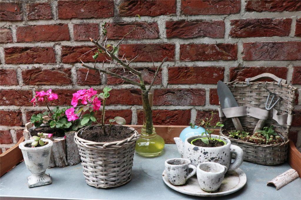Rita Liesner hat verschiedene Rosentriebe eingetopft. Ein bis vier Jahre bleiben sie – je nach Wachstum – im Topf und immer draußen. Dann bekommen sie einen Platz in den Blumenbeeten.