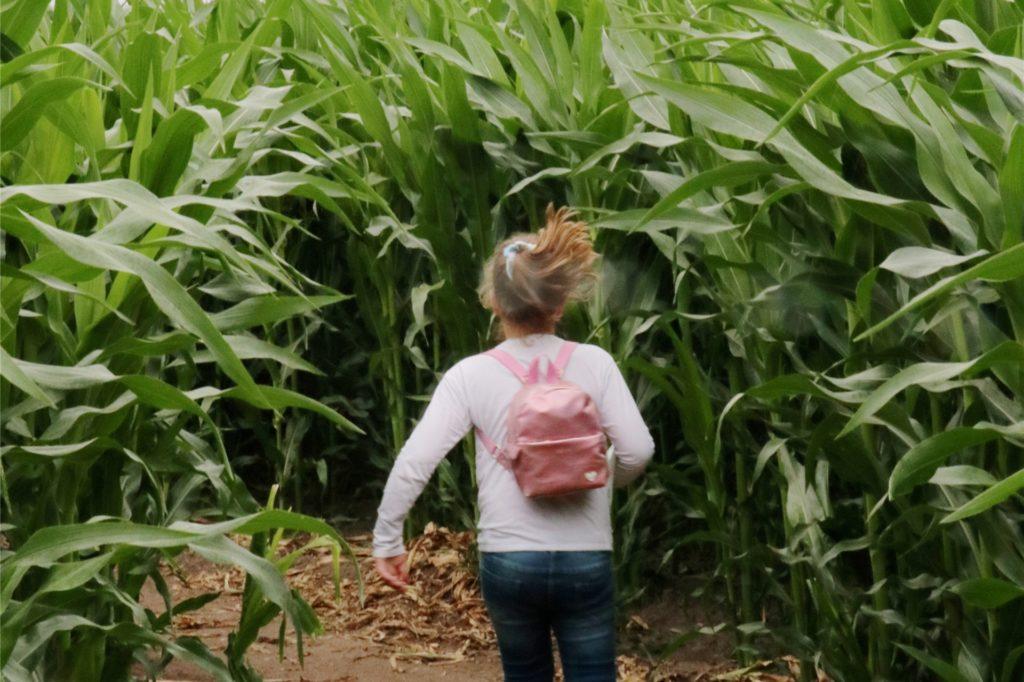 Im Maislabyrinth gilt es Aufgaben zu erfüllen.