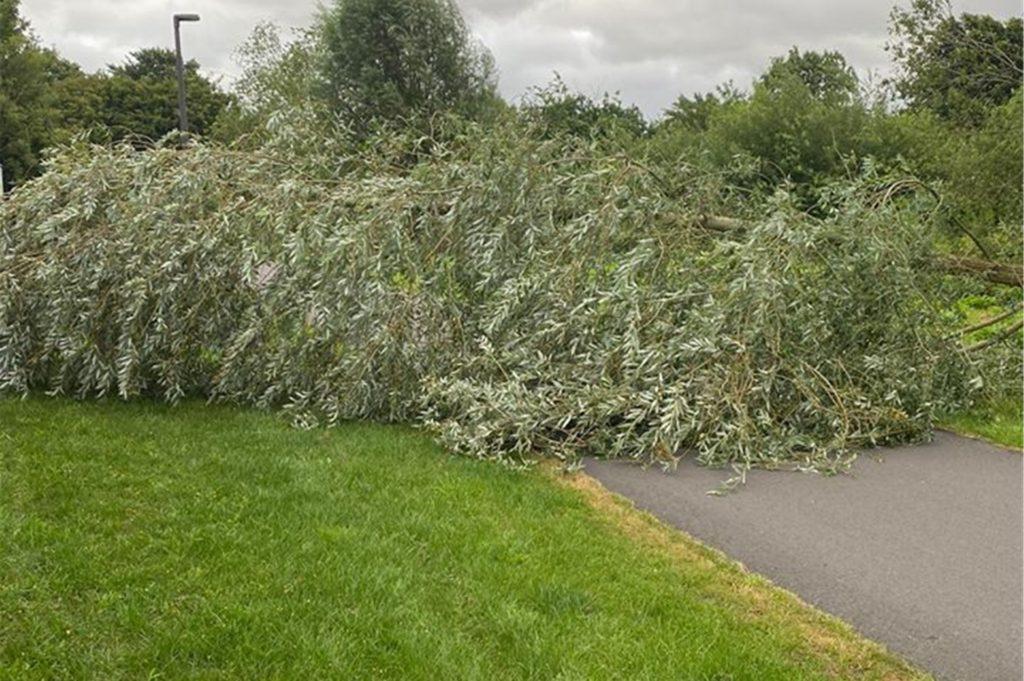 Ein umgestürzter Baum versperrte am Sonntagmorgen den Schnellradweg in Stadtlohn.