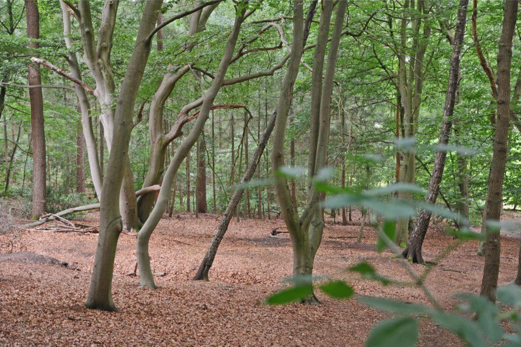 Zauberhafte Aussichten bietet der Laubwald.