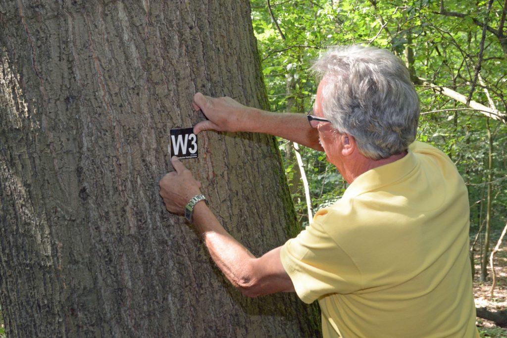 Gisbert Bensch markiert einen der Bäume im Werner Stadtwald. Die neuen Rundwanderwege waren auf Initiative des Wanderclubs Werne konzipiert worden.