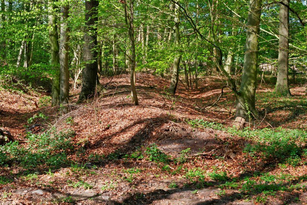 Reste einer mittlerweile witterungsbedingt verflachten Landwehr in einem Wald in der Nähe von Enning Barriere.