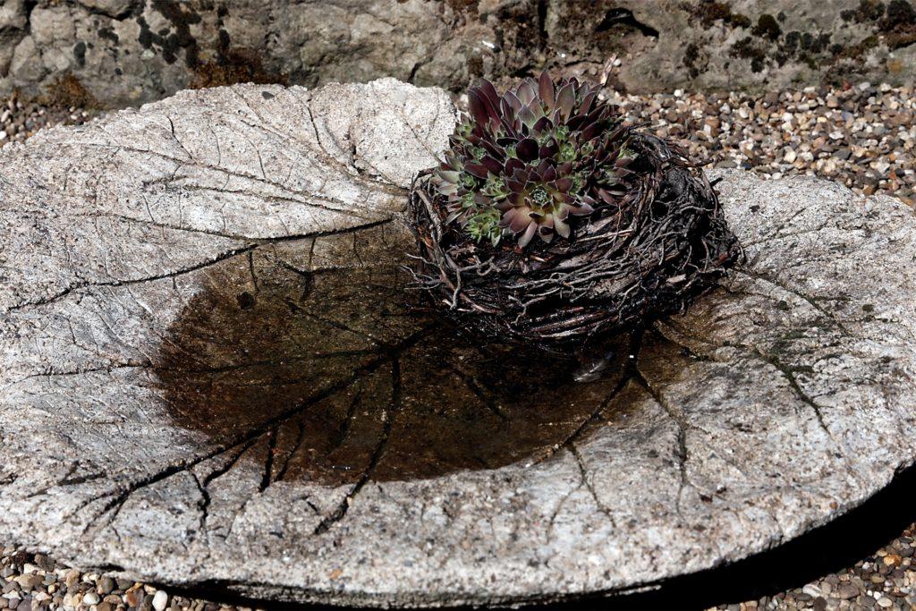Vogeltränke mit dem Abdruck eines Rhabarberblattes.
