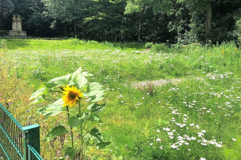 Auch Sonnenblumen wachsen im Regenrückhaltebecken.