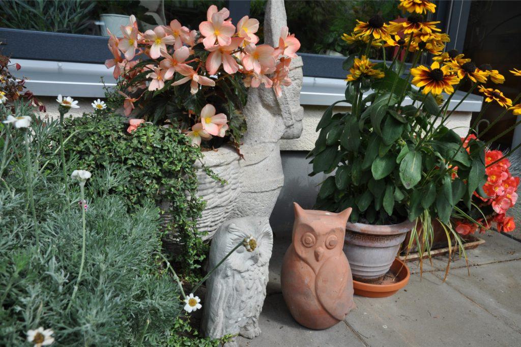 Heide Wittrien hat sich auf ihrer Terrasse ein blühendes Paradies geschaffen.