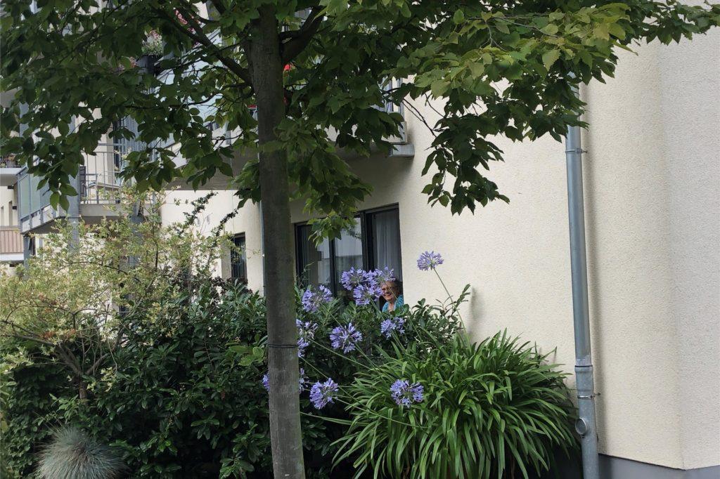 Langsam erweitert Heide Wittrien ihre Terrasse, dazu gehören auch die blauen Schmucklilien. Die Ulme vor dem Haus hat sie vor einem Jahr mit viel Wassereinsatz vor dem Vertrocknen gerettet.