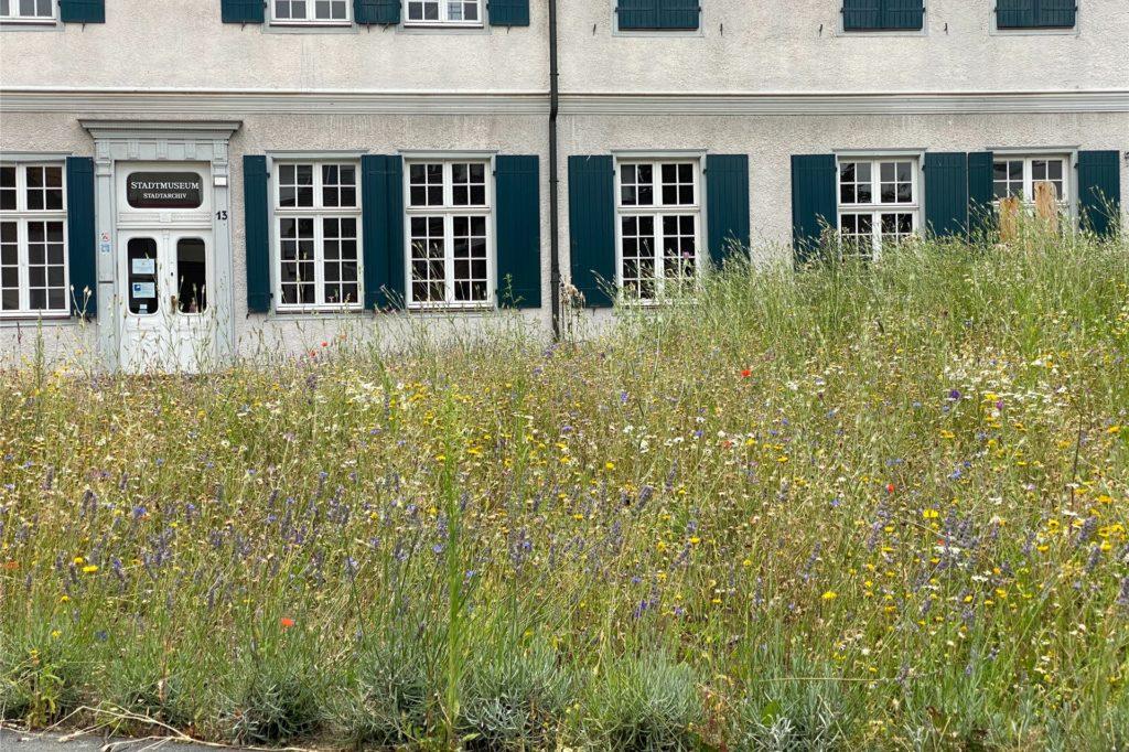 Bei dem Blühstreifen vor dem Stadtmuseum handelt es sich um eine einjährige Mischung. Deswegen steht die Wiese hier noch in voller Blüte.