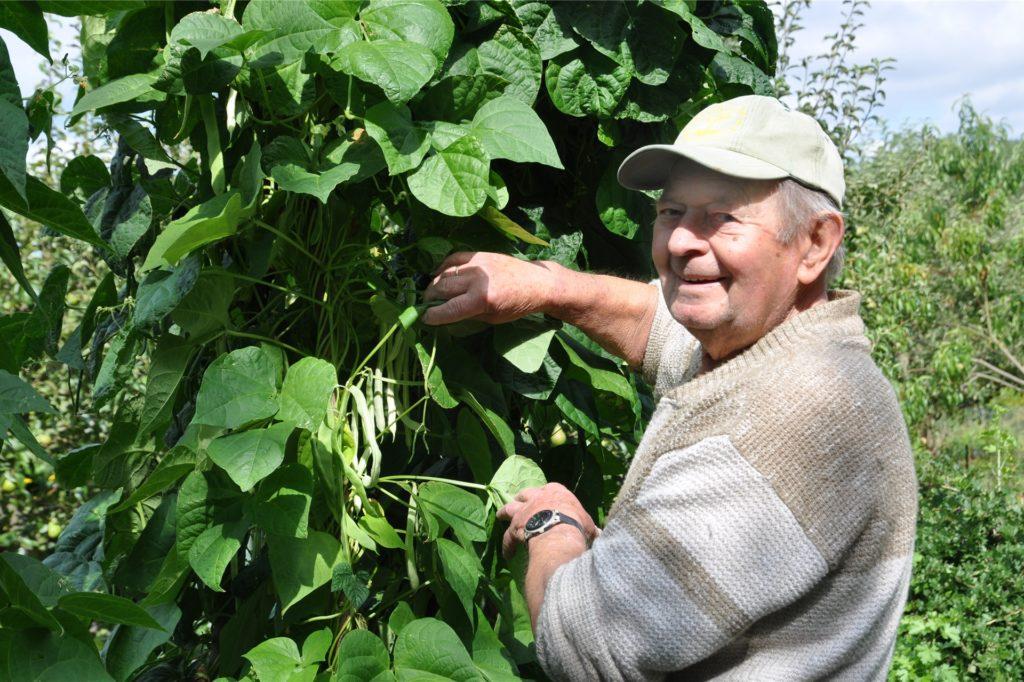 Hans Bressan zeigt seine Bohnen. Auch hier wird es reiche Ernte geben.