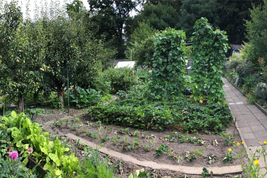 Der Blick zeigt: Es geht vor allem um Gemüse und Obst.