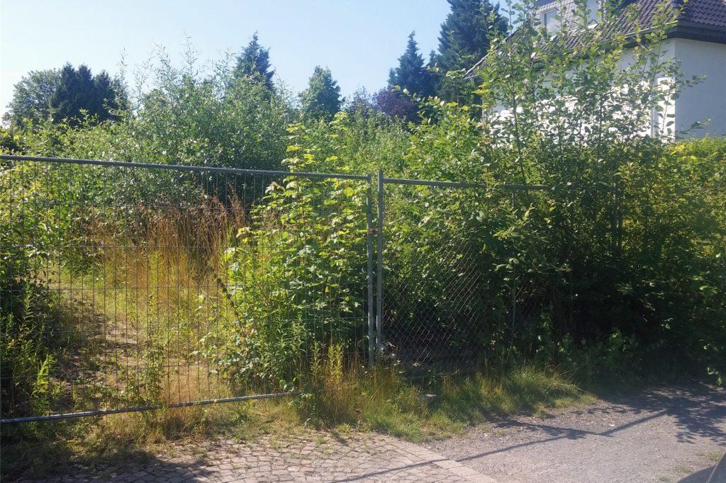 Dieses verwilderte Grundstück befindet sich am Stadtgarten in der Sackgasse zur Schillerstraße.