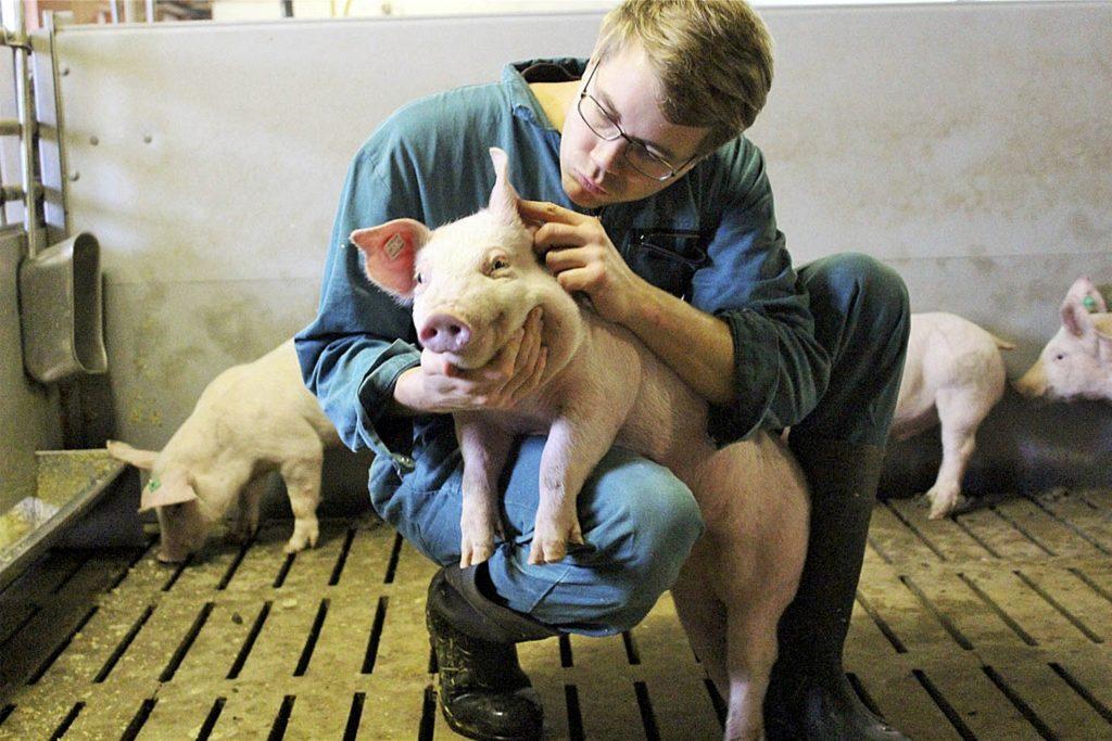 Die Ferkel, die Schweinebauern wie Christoph Selhorst, teuer eingekauft haben, stehen heute als schlachtreifes Vieh länger als gedacht im Stall. Und das kostet den Landwirt viel Geld.