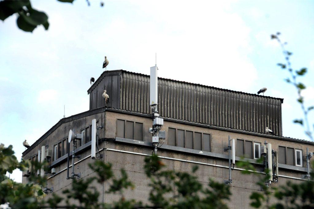 Von Störchen belagert ist derzeit jeden Abend das Silo des Raiffeisen-Kornhauses an der Schützenstraße.