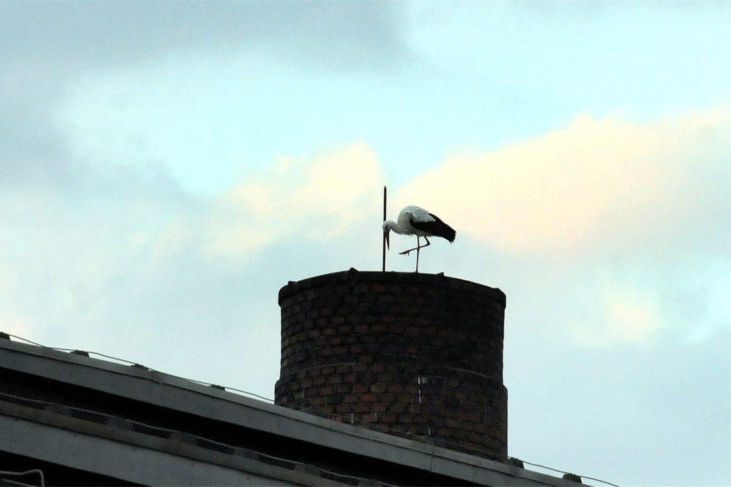 Einen Schornstein-Stummel im früheren Eisenbahn-Ausbesserungswerk hat sich dieser Storch als nächtlichen Ruheplatz ausgesucht.