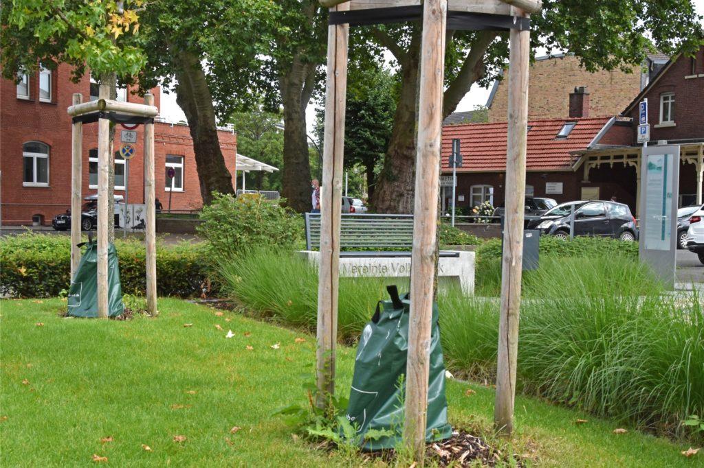 """Die Bäume am Südwall pflanzte der Schützenverein Altstadt im Rahmen einer Maßnahme von """"Wir machen Mitte"""". Die Wassersäcke spenden den Jungbäumen immer ausreichend Wasser."""