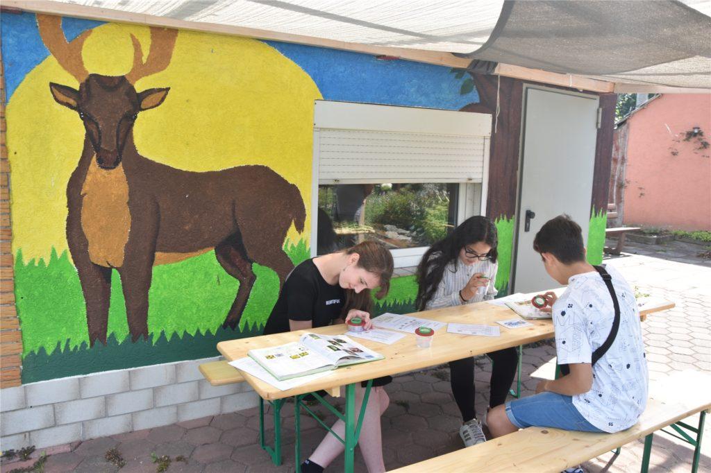 Im Schulgarten kann der Biologie-Unterricht an der frischen Luft und in der Natur stattfinden.
