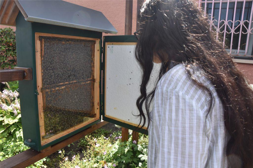 Schülerin Gülcan am Bienenschaukasten - auf der Suche nach der Bienenkönigin.