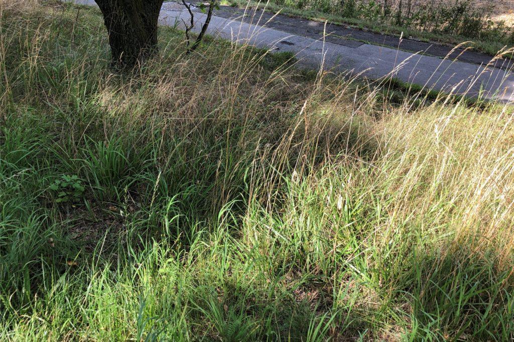 Laut Kreis Unna werden die Bereiche rund um die Bäume an der Freiherr-vom-Stein-Straße zum Herbst hin gemäht.