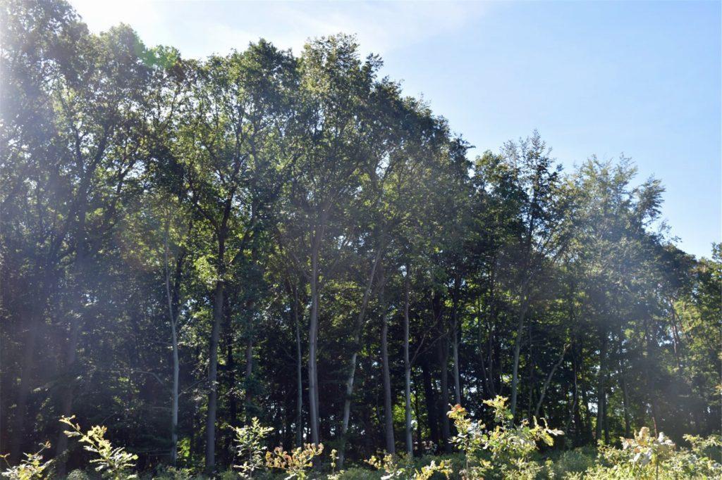 Die aufgeforsteten Bäume entwickeln sich verhältnismäßig gut.