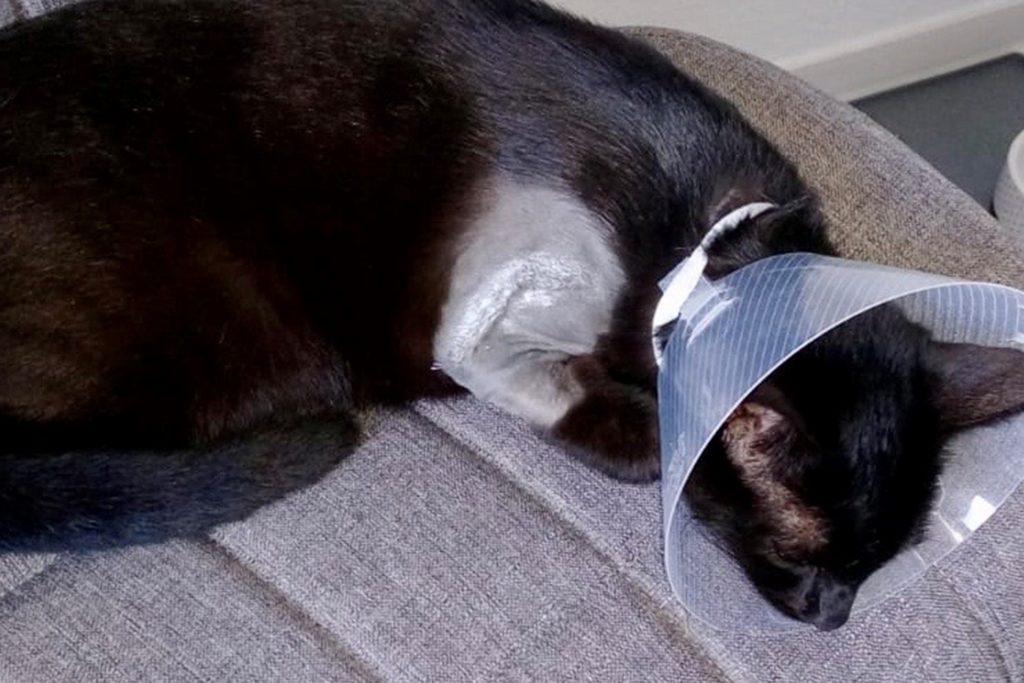 An der Schulter, wo die Kugel herausoperiert wurde, hat Luna eine große Wunde.
