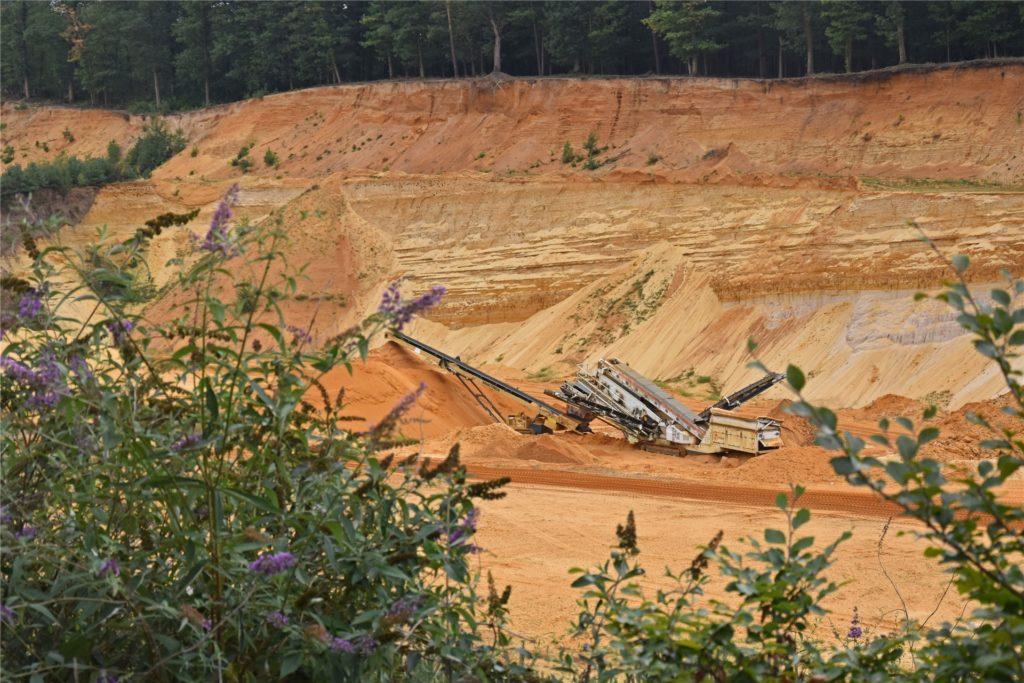 Die ausgewiesene Sandgrube an der B224 ist etwa 40 Hektar groß. Im Vordergrund: Sommerflieder, den Schmetterlinge lieben.