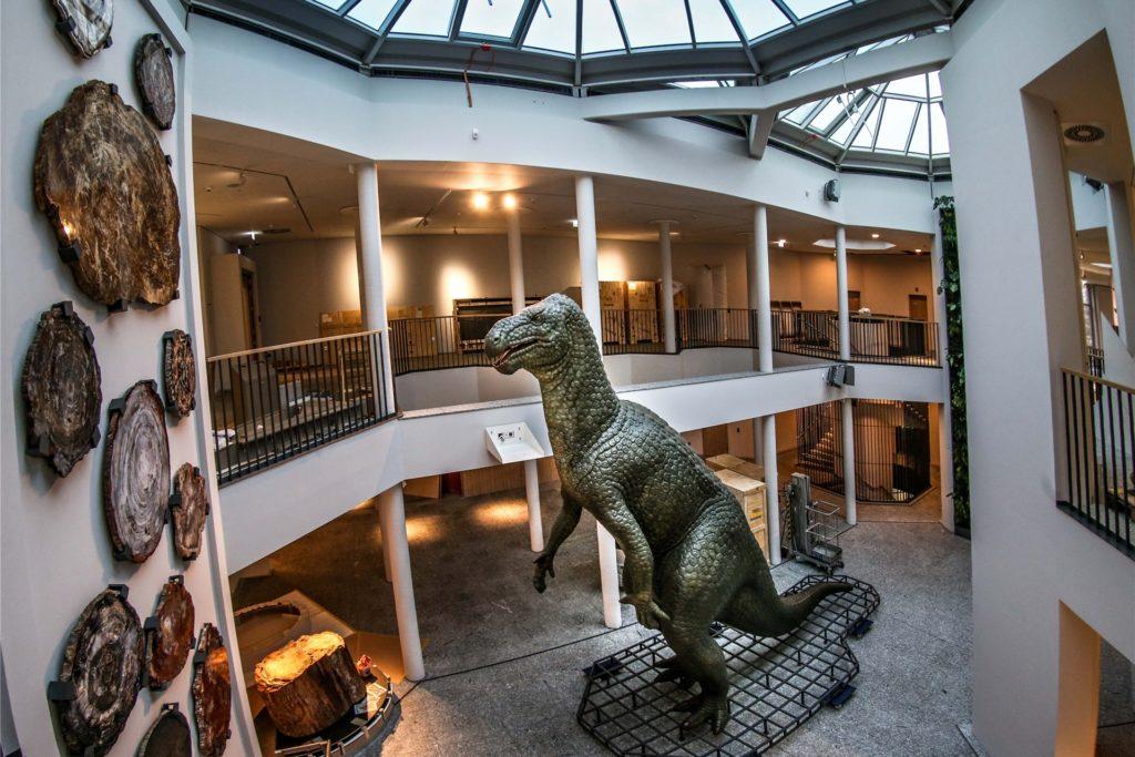 Das Naturmuseum am Fredenbaum ist erstmals seit sechs Jahren wieder bei einer Museumsnacht dabei.