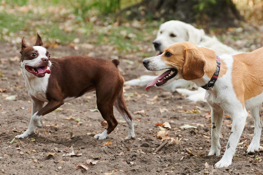 Wer in Castrop-Rauxel drei oder mehr Hunde hält, muss pro Hund und Jahr 120 Euro Hundesteuer an die Stadt abführen.