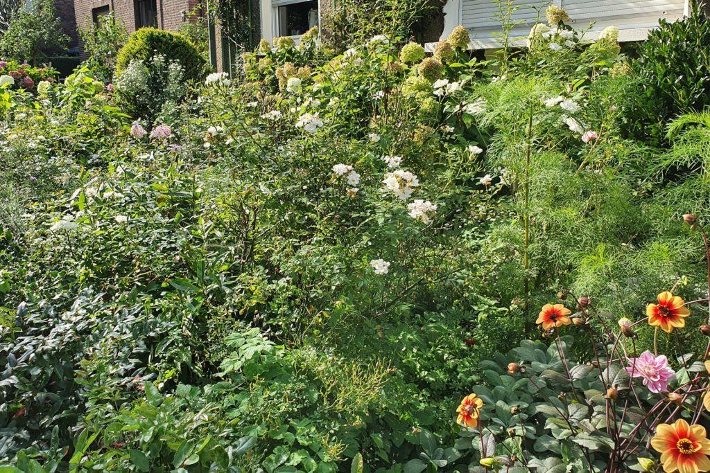 Eine umwelt- und insektenfreundliche Alternative zu den Schottergärten zeigt dieser Garten in Castrop-Rauxel.