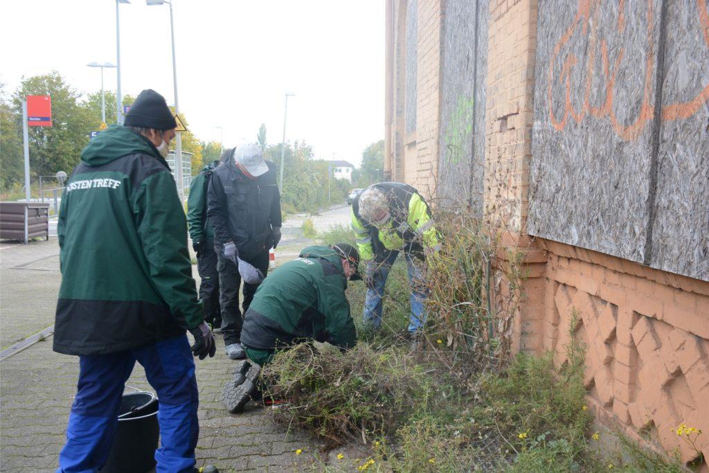 Die Quartiershausmeister des Dorsten-Treffs sicherten die schützenswerten Pflanzen am Dorstener Bahnhof.