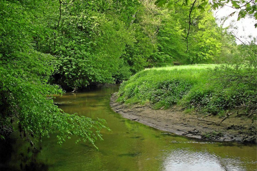 Im Waldgebiet Bockwinkel hat die Berkel noch ihren natürlichen Verlauf.