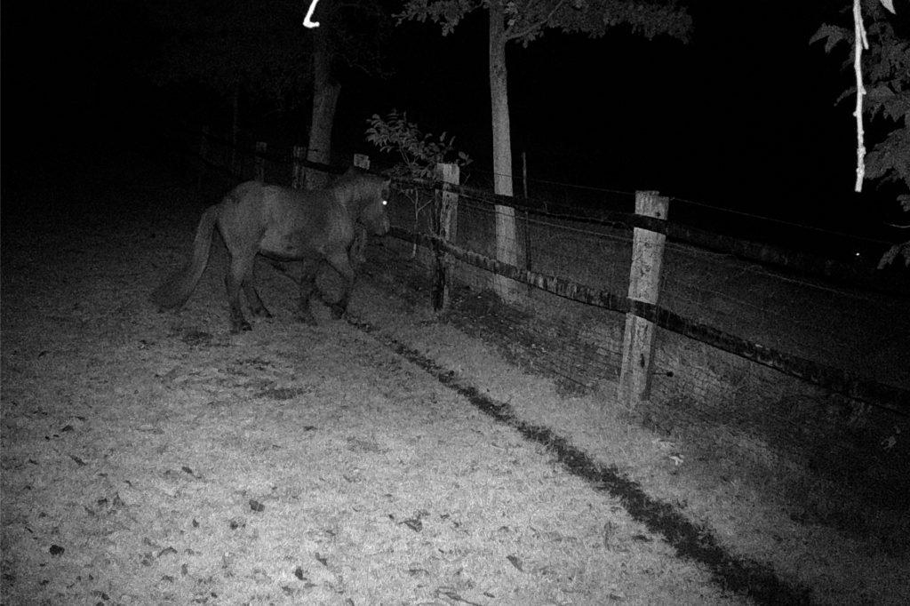 Das Bild zeigt ein Pony, das laut Bürgerforum einen Wolf außerhalb des Geheges fixiert.