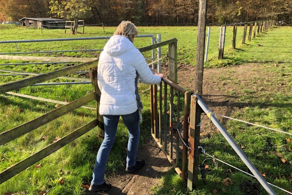 Das gibt's auf keinem anderen Werner Wanderweg: Einmal quer über die Weide - inklusive Tore öffnen und schließen.