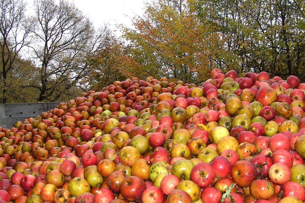 Die Mosterei Gottessegen verarbeitet jährlich Unmengen an Äpfeln. Zuletzt soll es dort einen Praktikanten gegeben haben, der sich nicht an die Corona-Regeln hielt.