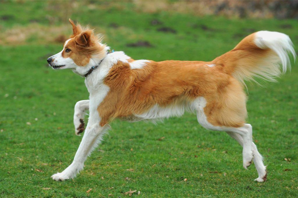 Ein Hund muss Freude daran haben, zu Herrchen oder Frauchen zurückzukommen.