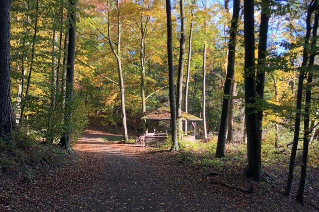 Große Teile des Waldgebiets im Dortmunder Süden sind krank oder zumindest geschwächt.