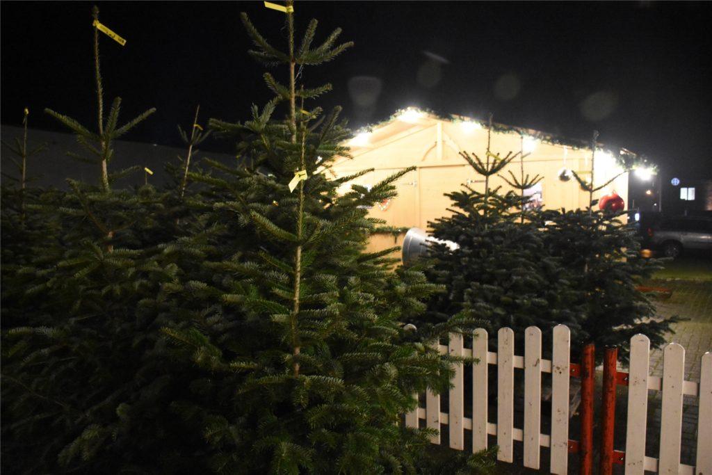 Zum ersten Mal überhaupt verkaufen die Telökens auch Weihnachtsbäume.