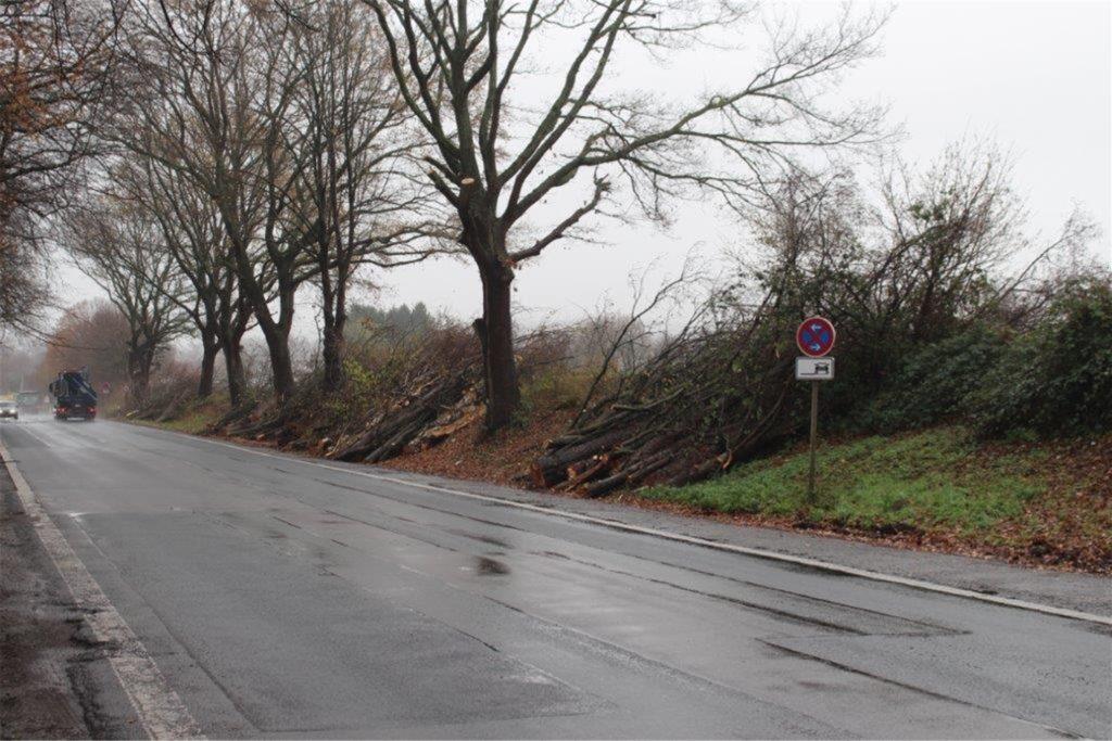 Auch an der Ruhrtalstraße mussten reichlich Bäume weichen.