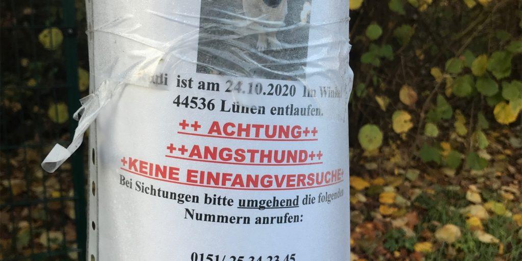 An einem Strommast zwischen dem Castrop-Rauxeler Ortsteil Frohlinde und dem Dortmunder Stadtteil Westerfilde hängt seit einiger Zeit dieses Plakat.