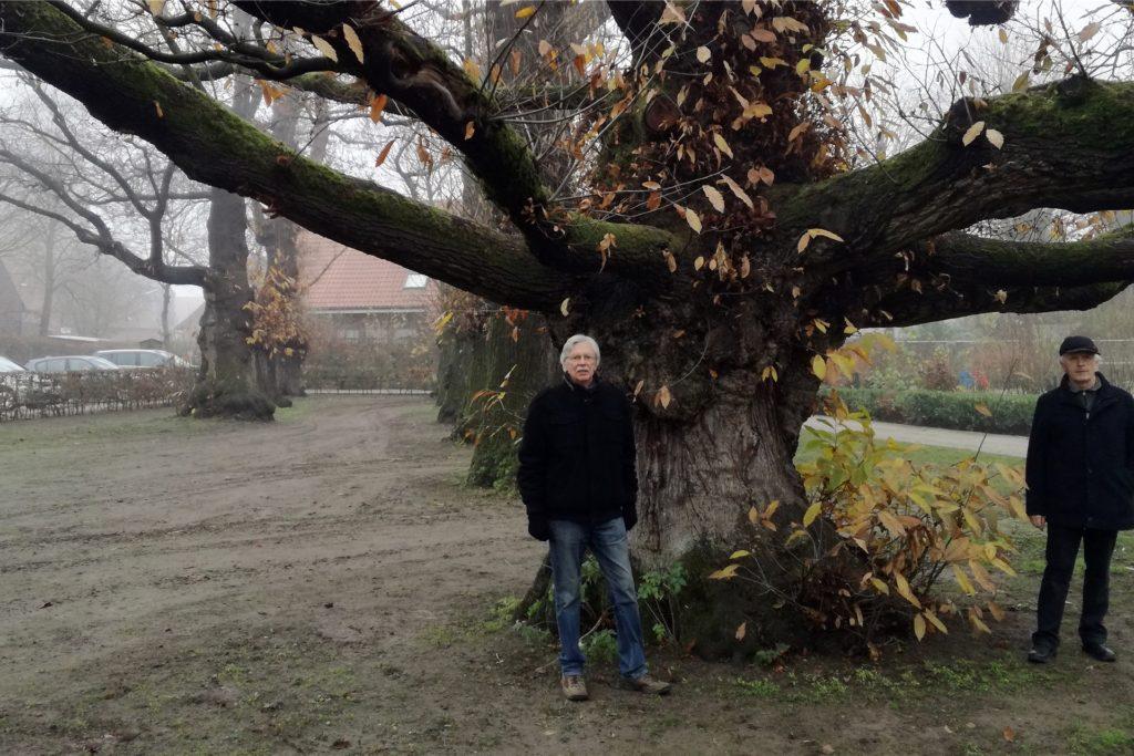 Teilweise fünf Metern Umfang weisen die Kastanien auf, die rund 220 Jahre alt sind.