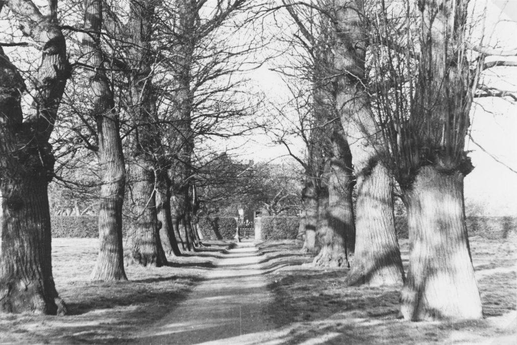 Durch die Kastanienallee ging es in den 1940er-Jahren noch von der Kirche in den Garten des Pastors.