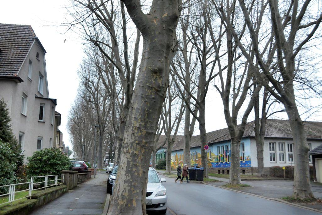 Während der Baumpflegearbeiten kann in der Wittekindstraße nicht geparkt werden. Sie wird abschnittsweise auch für den Verkehr gesperrt.