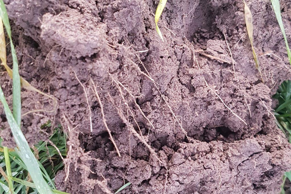 Feinkrümelige Bodenstruktur mit besser ausgeglichenem Nährstoffhaushalt