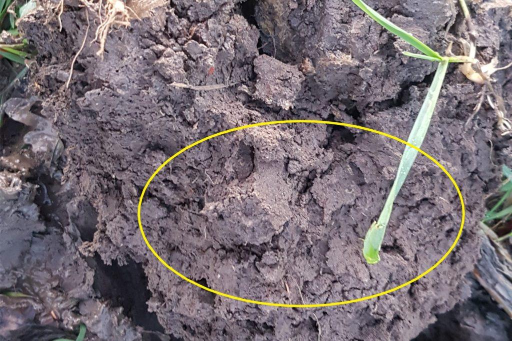 Bodenstruktur: größere und festere Kluten.