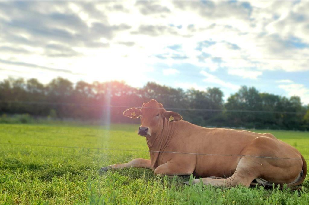 Rinderhaltung Hof Sagel Kirchhellen