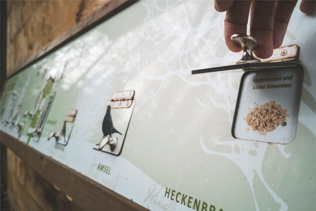 Information und Interaktion: Der Wildwald Vosswinkel versteht sich auch als Lernort, auf Tafeln wie dieser findet sich viel Wissen rund um die Natur.