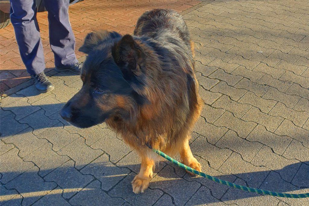 Polizeibeamte brachten den Hund ins Dortmunder Tierheim.