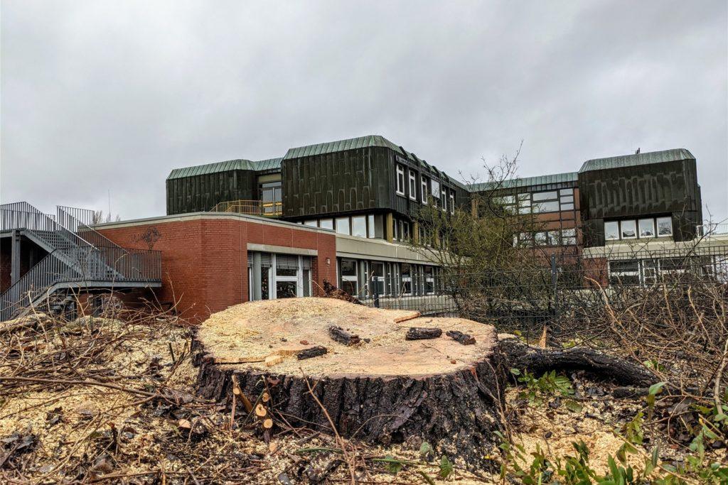 Auch die große alte Pappel an der Rampe zwischen Kanal und Petrinum-Schulhof wurde gefällt.