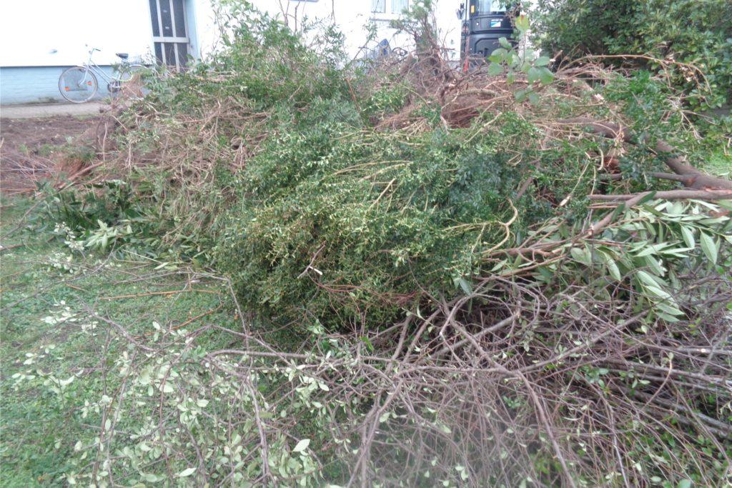 An der Christian-Morgenstern-Straße wurden Büsche und Sträucher von einem Gartenbauunternehmen in den letzten beiden Januarwochen entfernt.