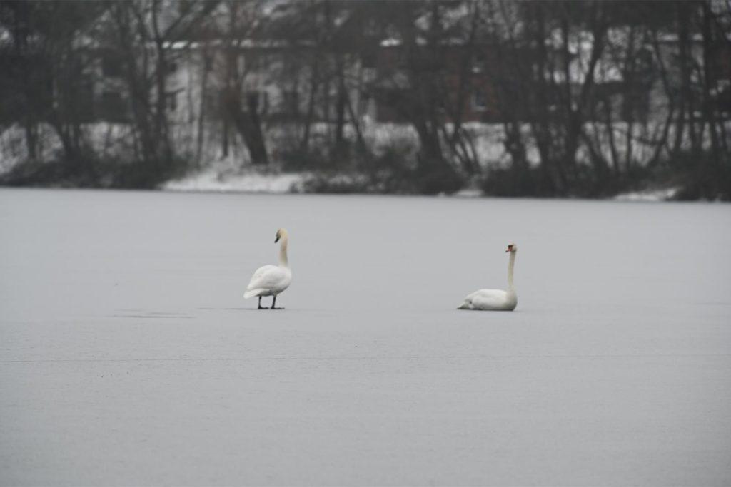 Die Wasservögel waren nicht festgefroren.
